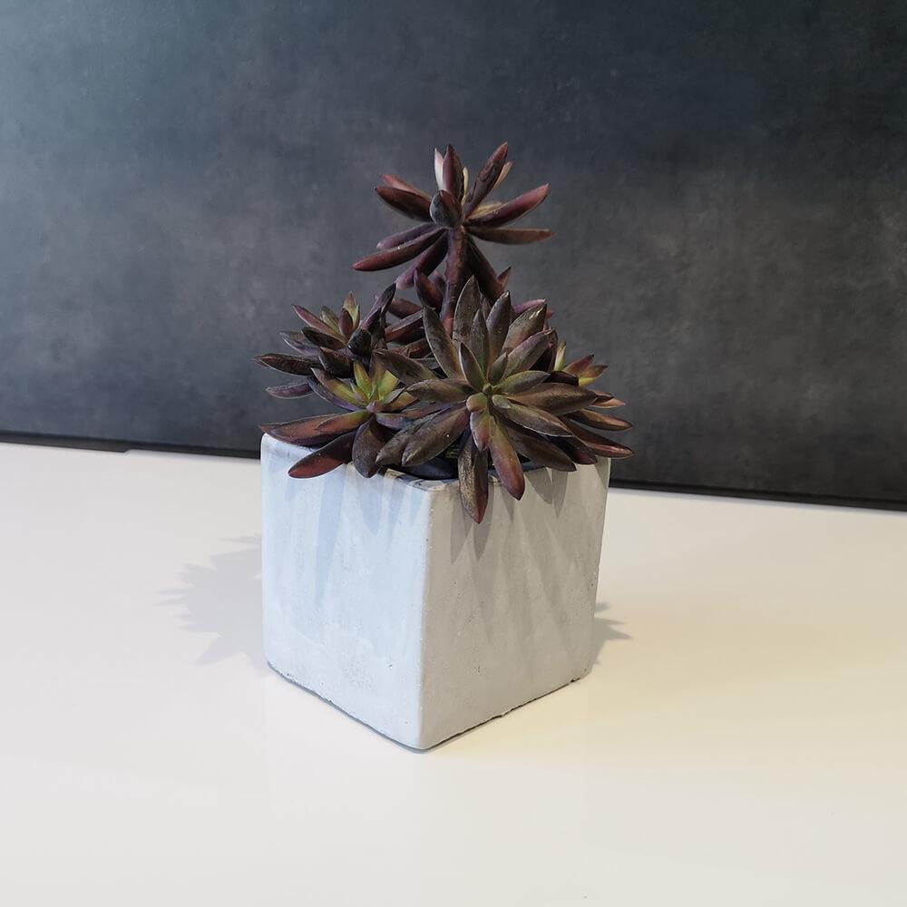 Декоративно цвете - мостра